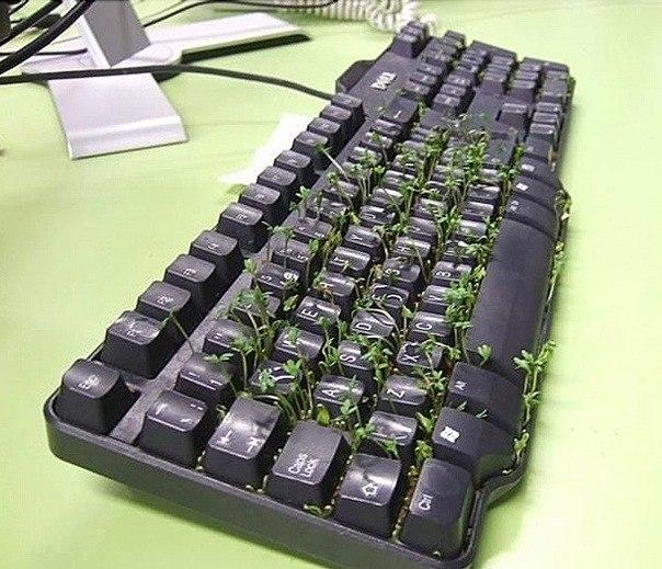Клавиатура цветёт